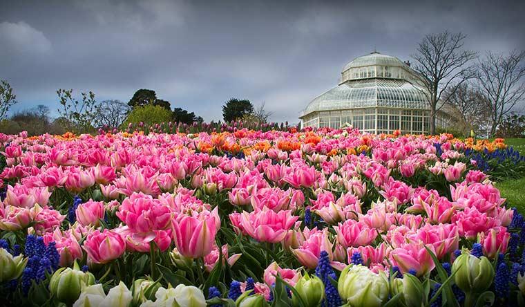 national-botanic-gardens