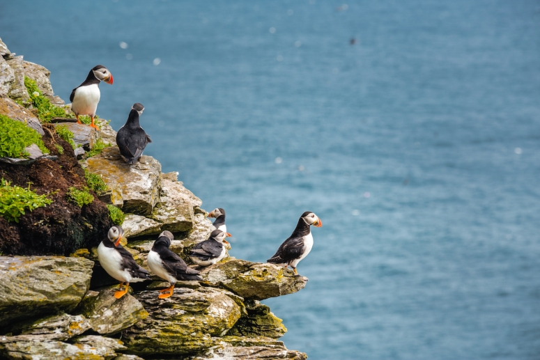 Skelligs-wildlife-Caspar-Diederik